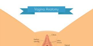 Vulva 101